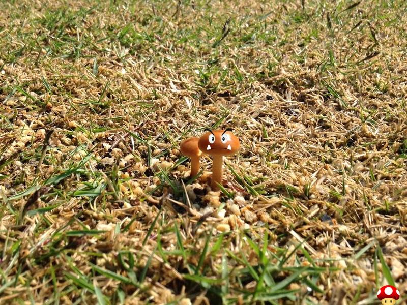 芝生に生えた謎のキノコ(近藤がイタズラ)