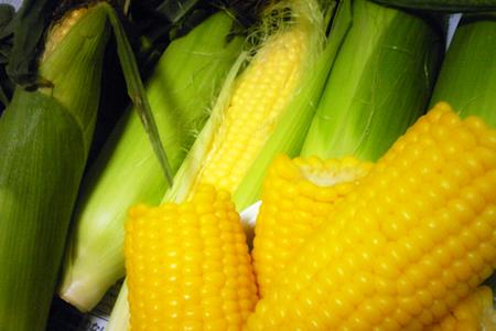 押谷ファームの朝どりトウモロコシ「めぐみゴールド」